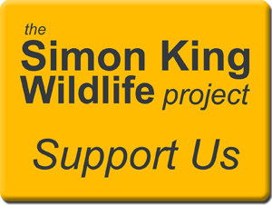 SimonKingProjectB