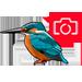 Kingfisher-icon