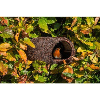 Brushwood Robin Nester