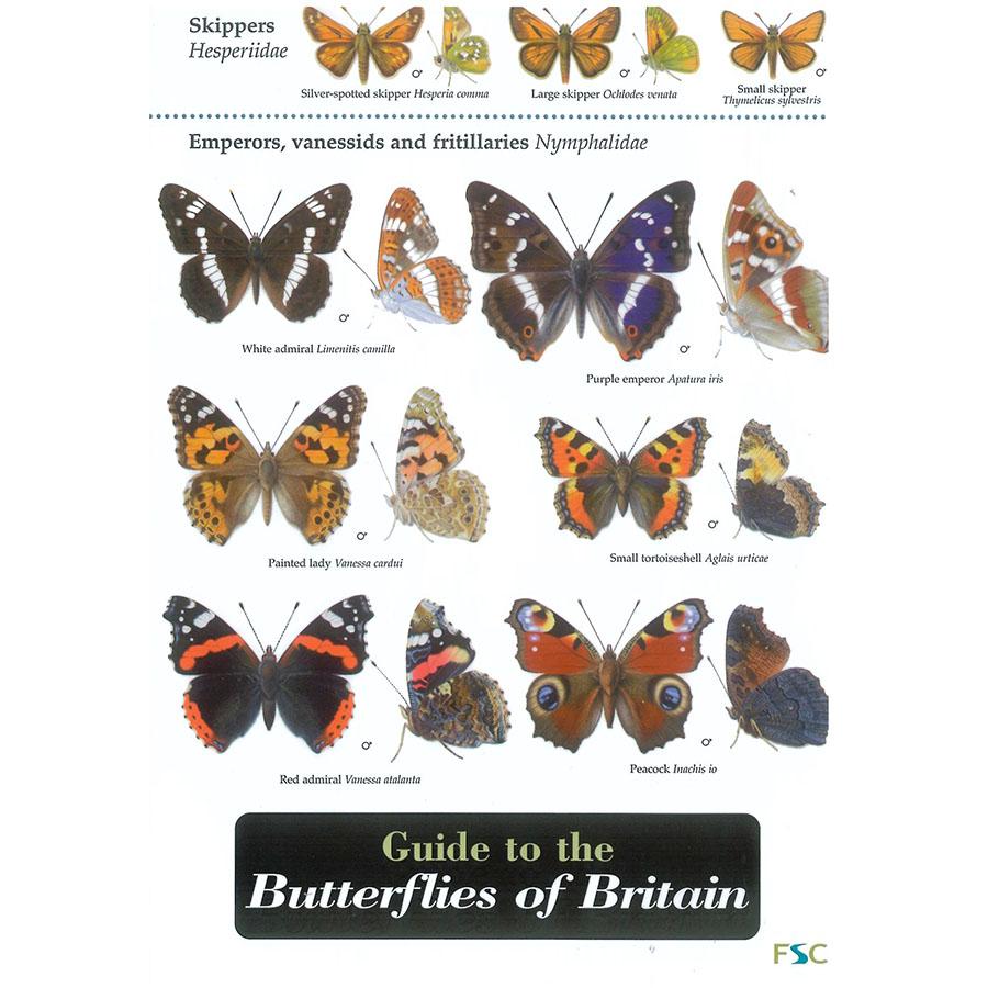 Butterflies Field Guide