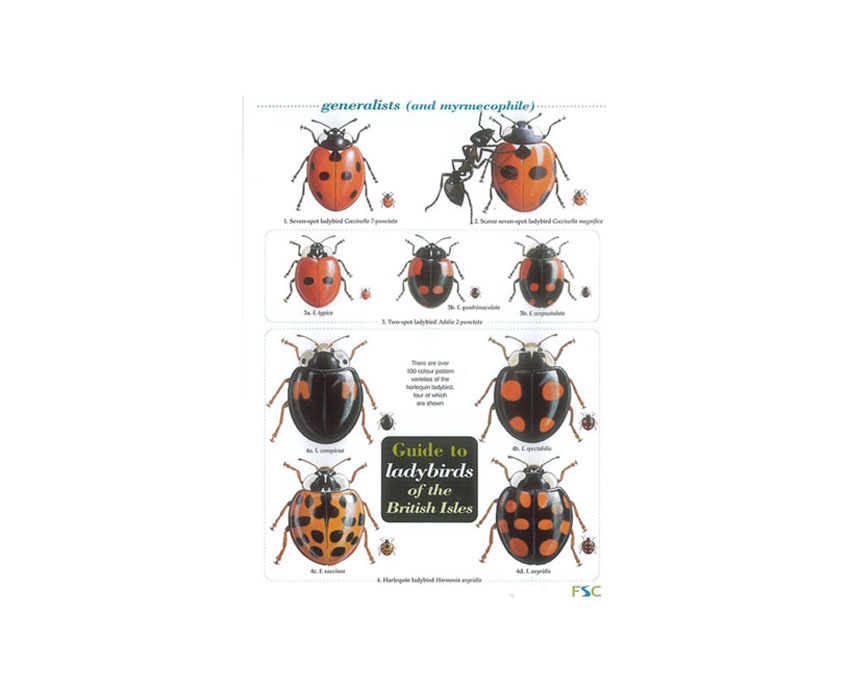 Field Guide – Ladybirds