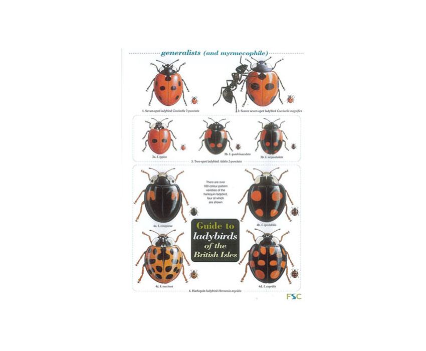 Field Guide – Ladybirds