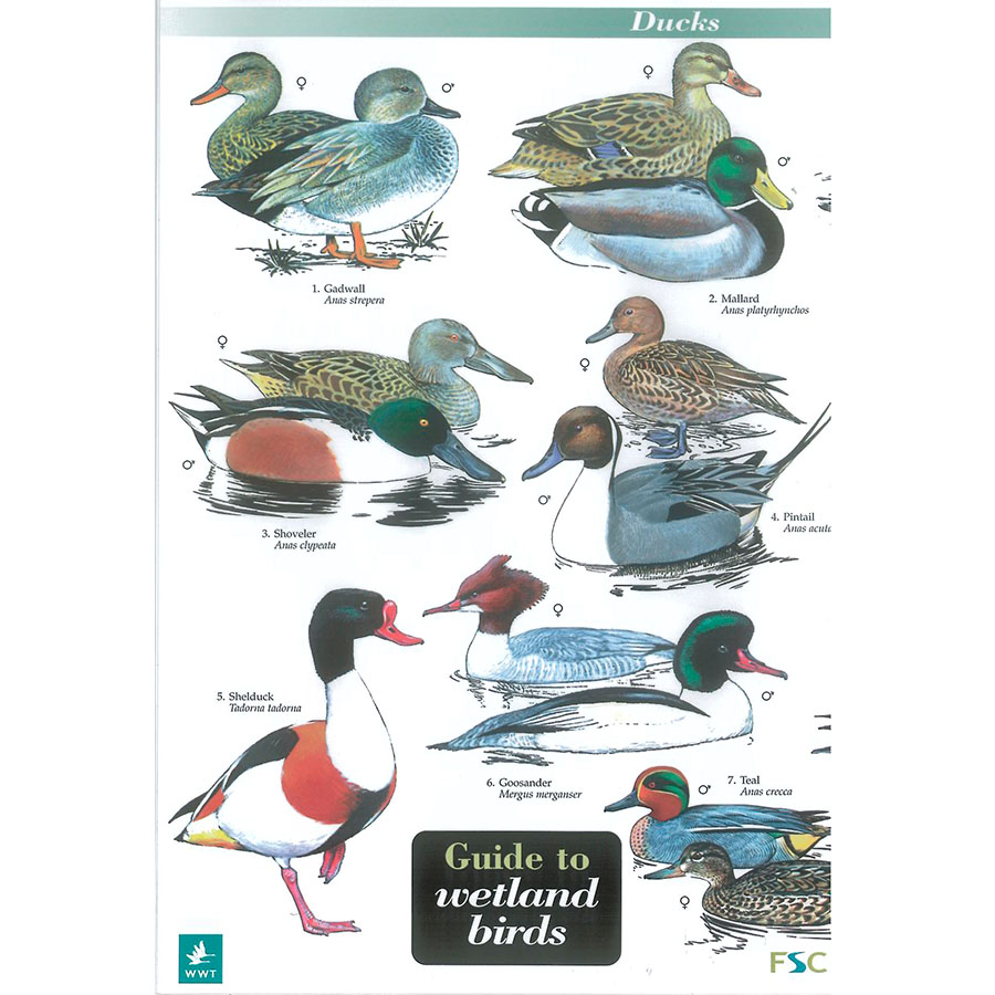 Field Guide – Wetland Birds
