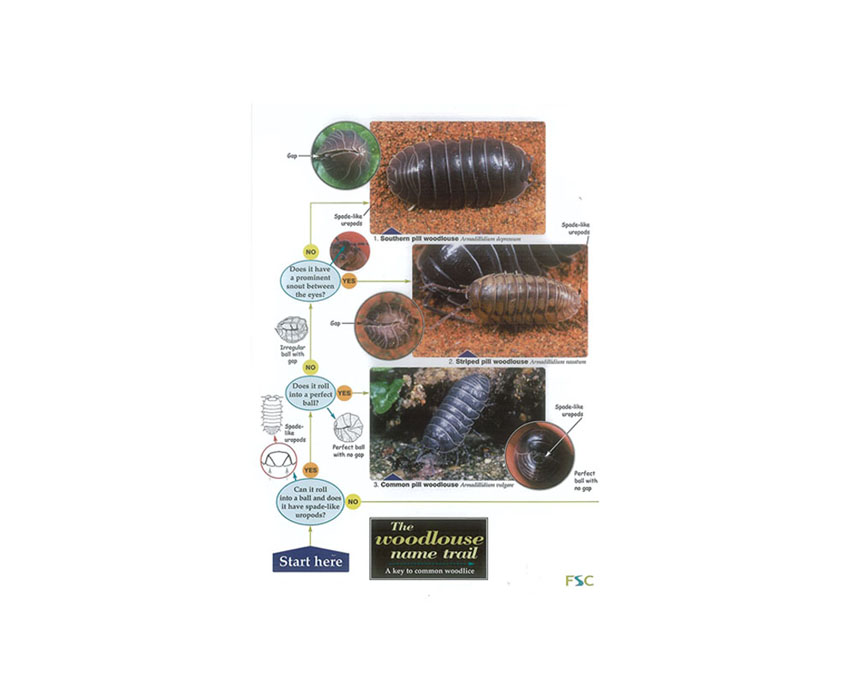 Field Guide – The Woodlouse Name Trail