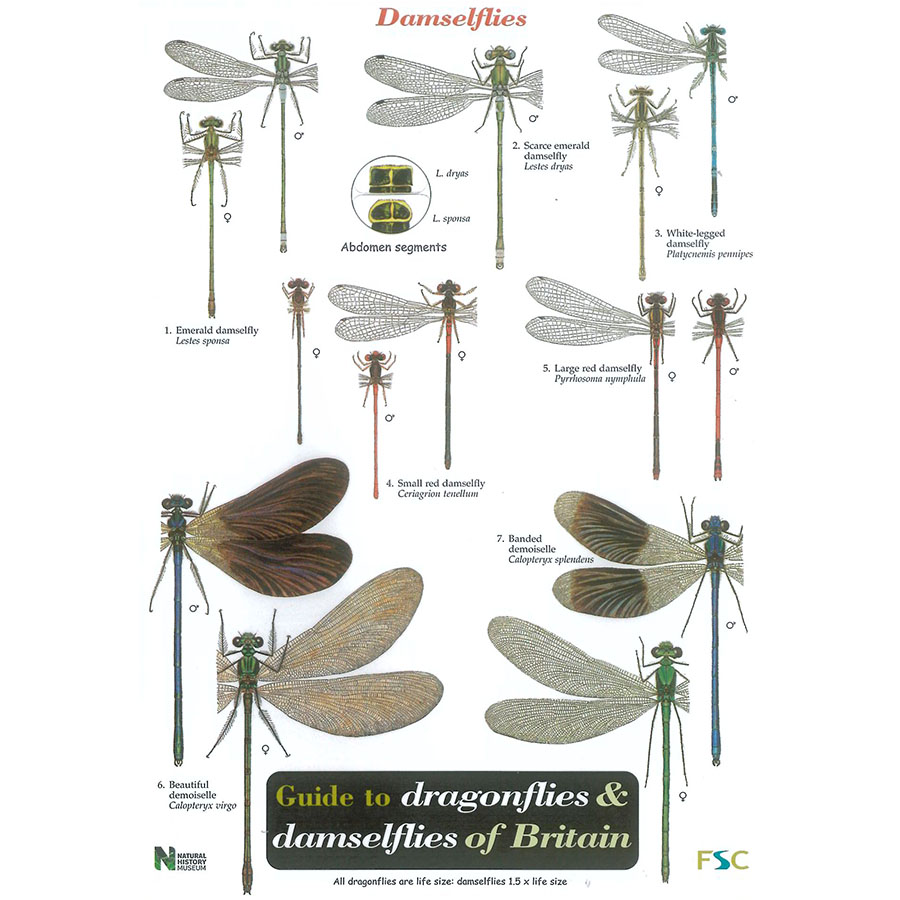 Dragionflies and Damselflies Field Guide