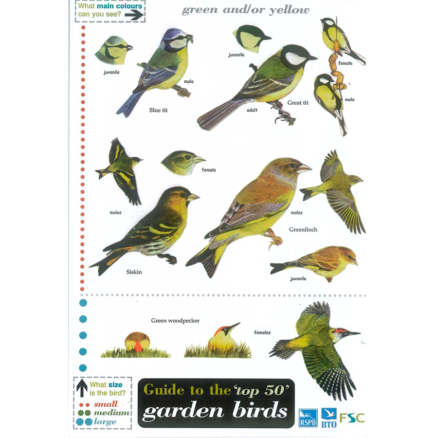 Field Guide Garden Birds