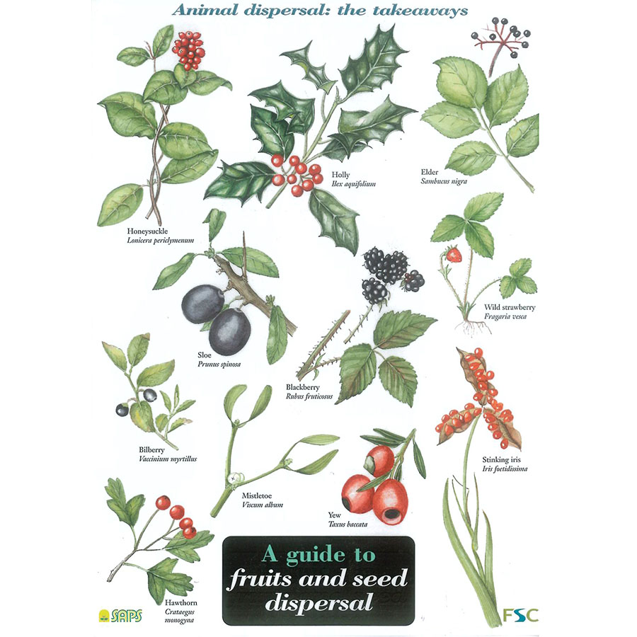 Field Guide – Fruits & Seed Dispersal