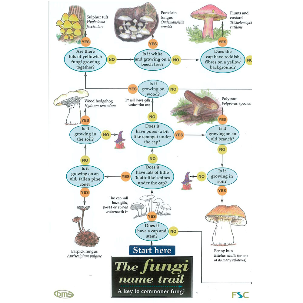 Field Guide – The Fungi Name Trail