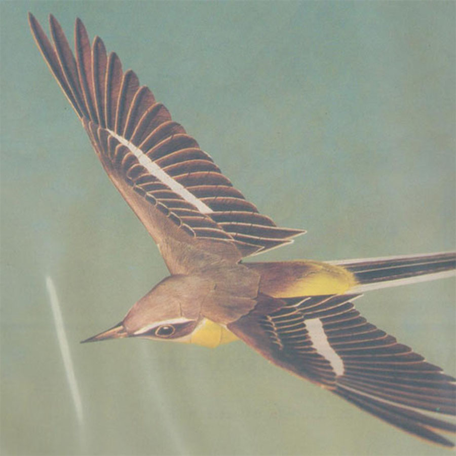 Flying Grey Wagtail
