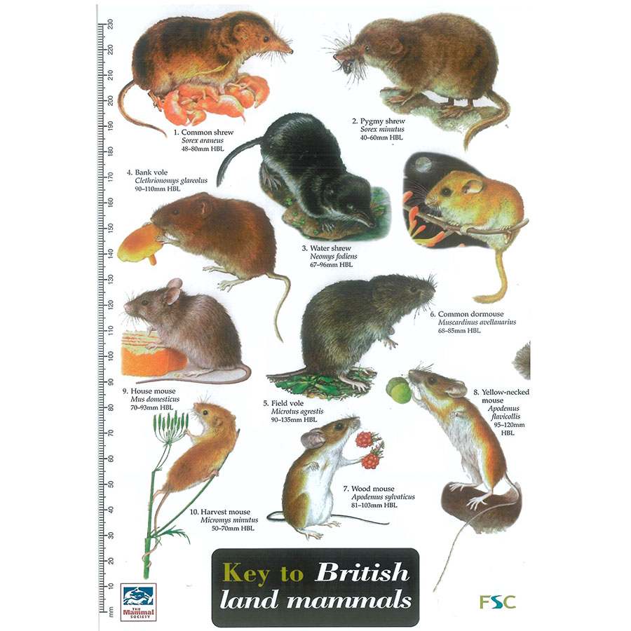 British Land Mammals Field Guide