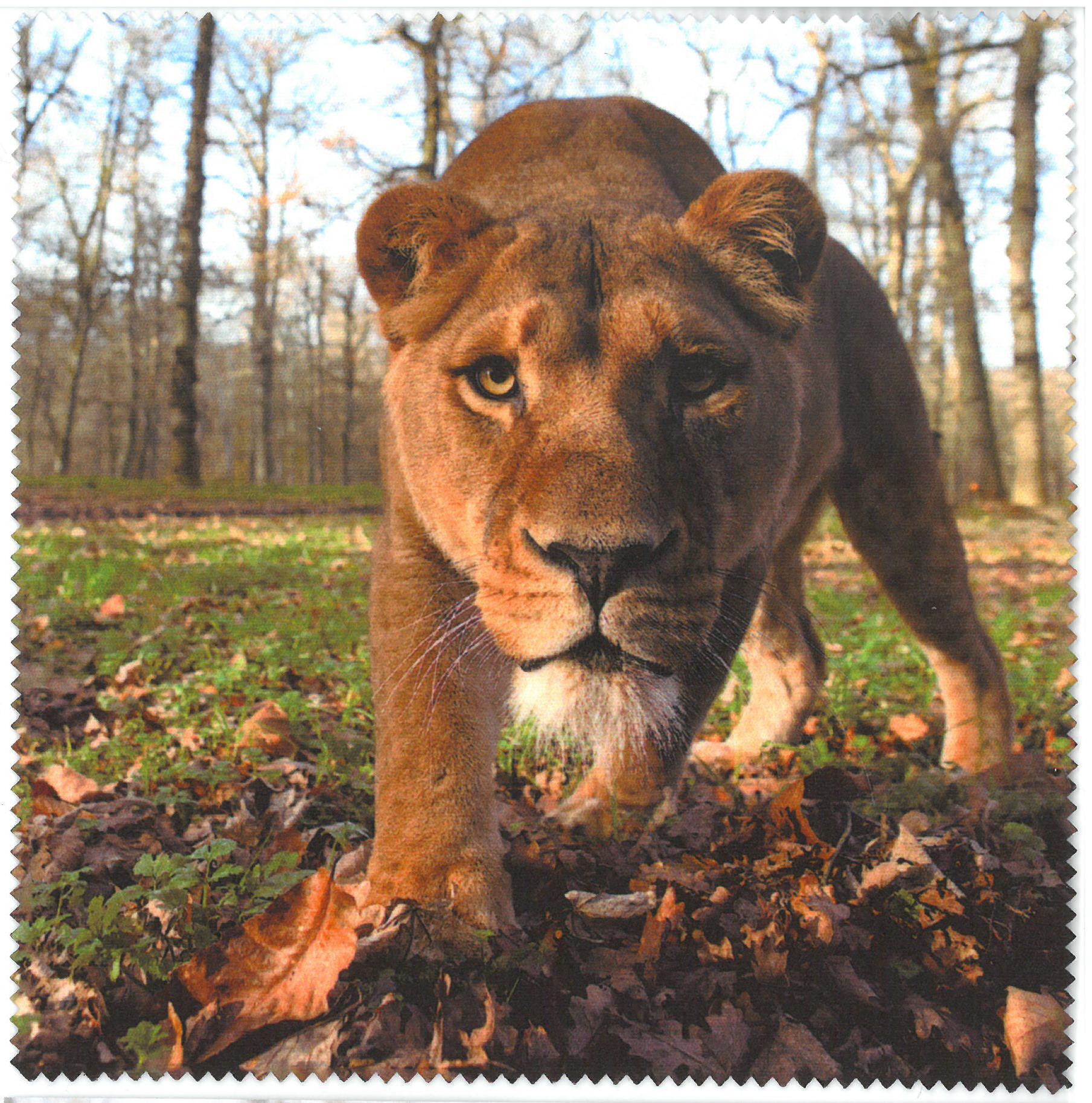 Lens Cloth – Lion