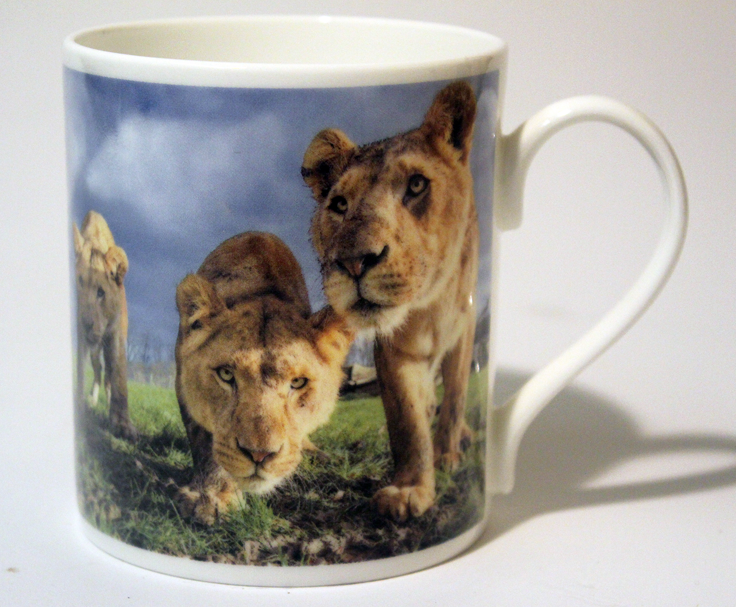 China Mug – Lion Cubs