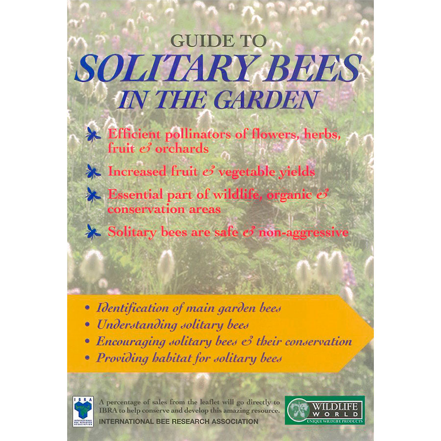 Field Guide – Solitary Bees