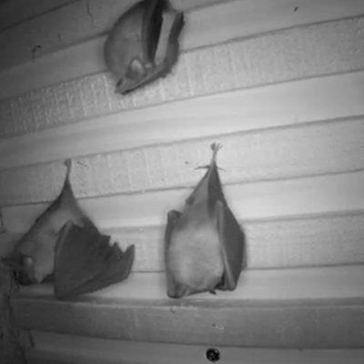 Hanging bat rack in use