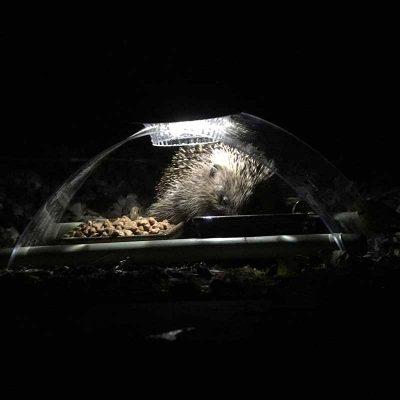 Hedgehog using feeder