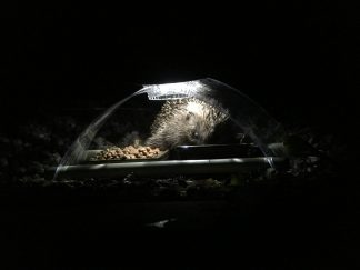 Illuminated Feeder in use