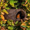The Simon King Brushwood Nester