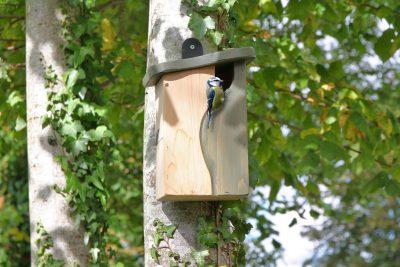 curve cavity nest box