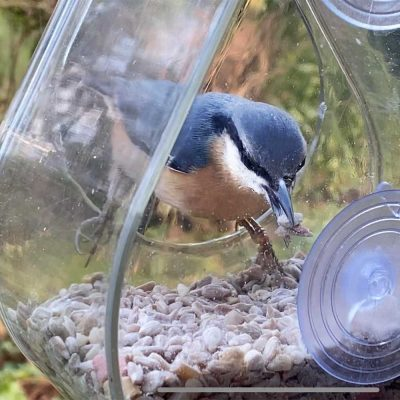 nuthatch at window feeder