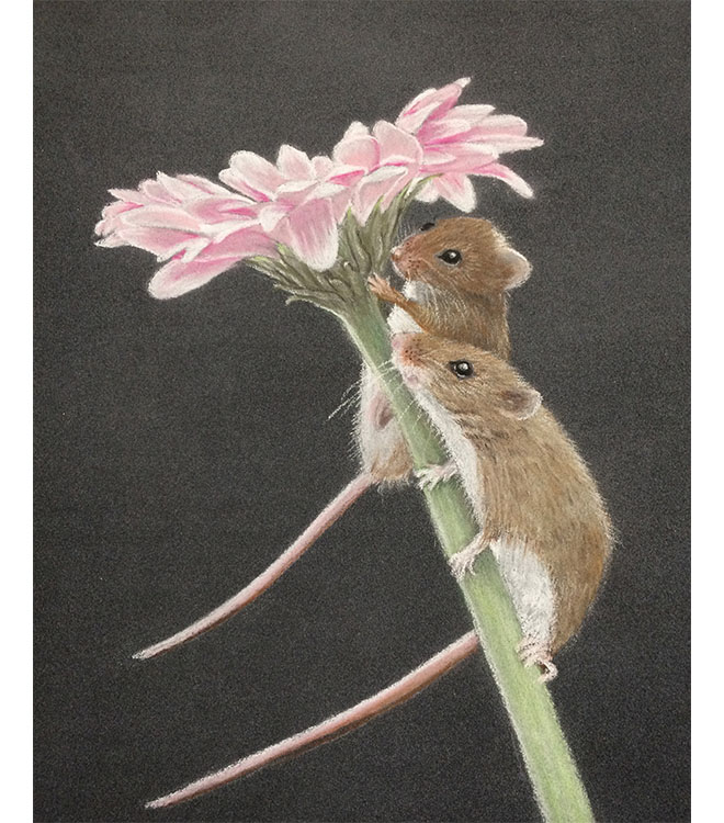 Harvest Mice Pastel Drawing