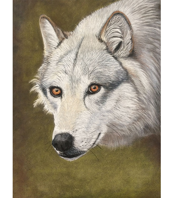 Wolf pastel drawing