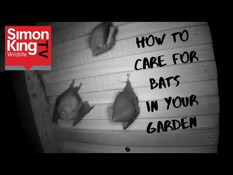 How To Attract Bats To Your Garden