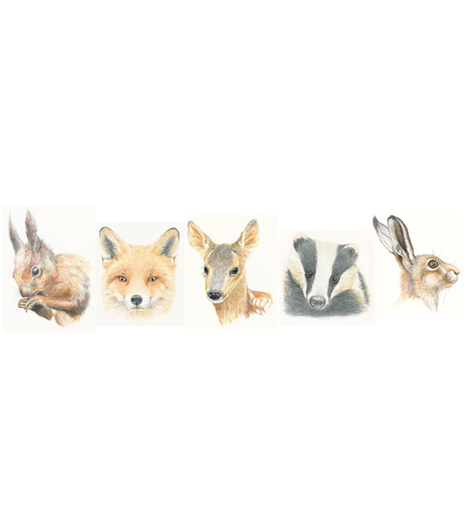 British Wildlife Cards