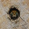 solitary bee in wood