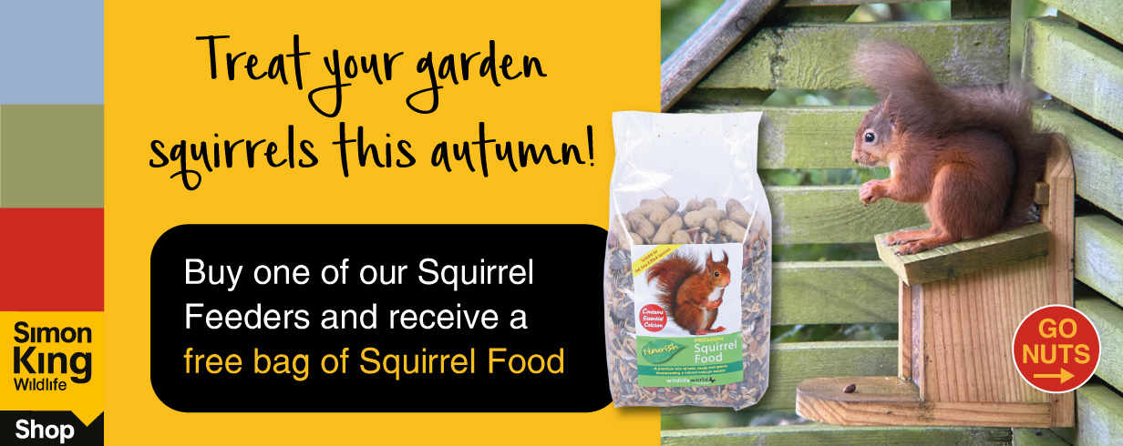squirrel feeder offer