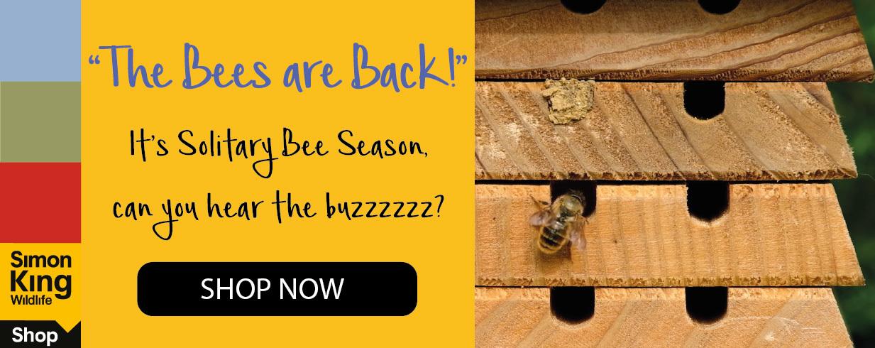 Solitary Bee Box