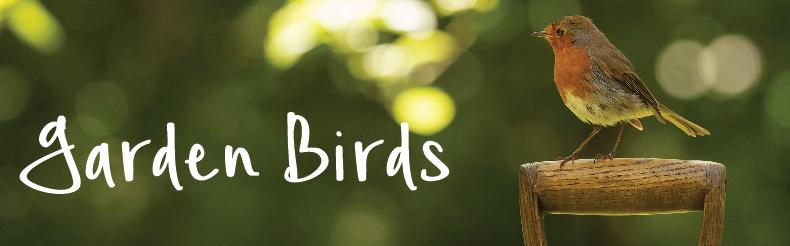robin on spade shop garden birds