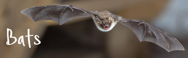 bat products