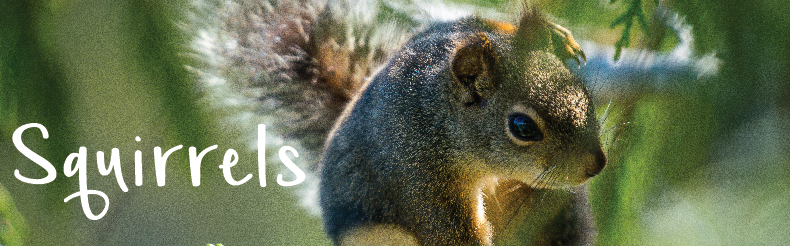 Shop squirrel products