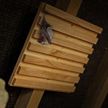 Hanging bat rack