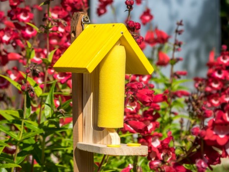 Butterfly & Bee Nectar Feeding Station