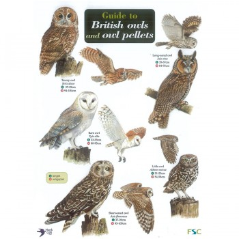 British Owls Field Guide