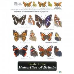 Field Guide – Butterflies
