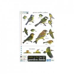Field Guide – Birds