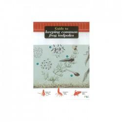 Field Guide – Keeping Frog Tadpoles