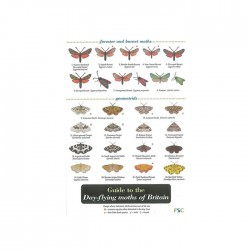 Field Guide – Day Flying Moths Of Britain