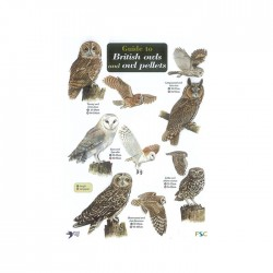 Field Guide – British Owls & Owl Pellets