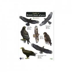 Field Guide – Birds Of Prey