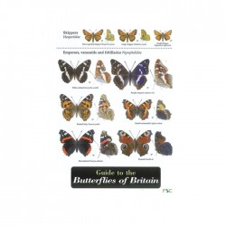 Field Guide – Butterflies Of Britain