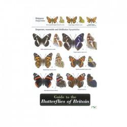 Field Guide – Butterflies Of Britain
