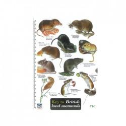 Field Guide – British Land Mammals