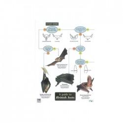 Field Guide – British Bats