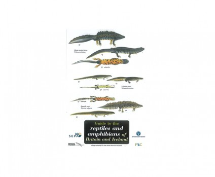 Field Guide - Reptiles & Amphibians