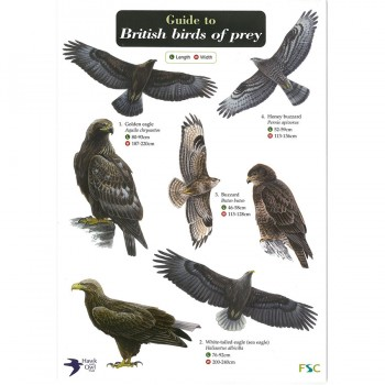 Field Guide Birds Of Prey
