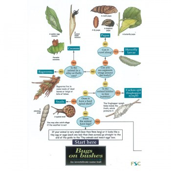 Bugs On Bushes Field Guide