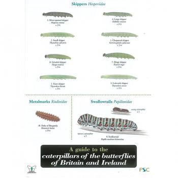 Caterpillars Filed Guide